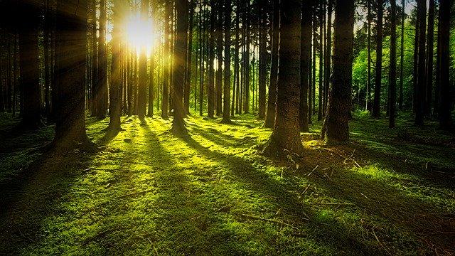 slunce v lese